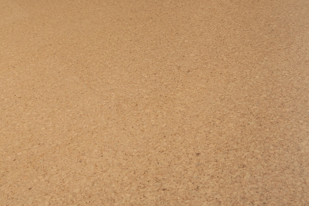 harvest-cashew-angle