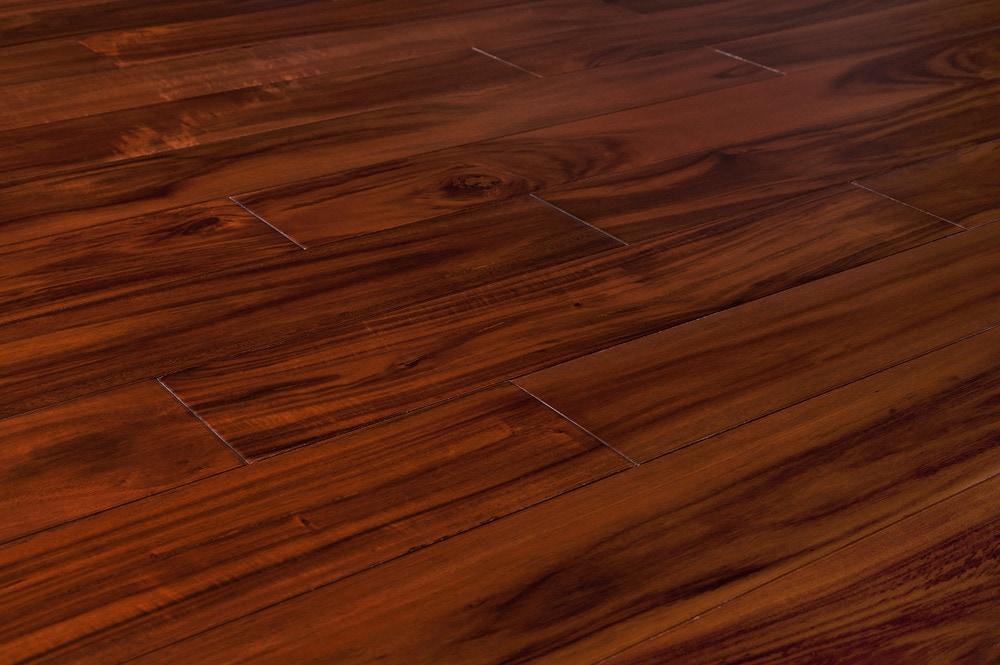 mahogany-small-leaf-acacia-standard-angle