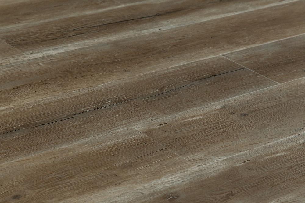 15002669-gladiol-angle