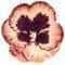petal_ptl01_org_4xrd_unc_57b4d8d0502fe