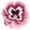 petal_ptl01_pink_4xrd_unc_57b4d8d4c3cdc